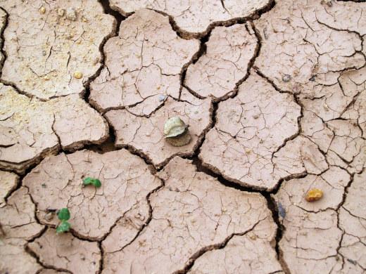 terra secca con una pianta a ricordare le brown biotech